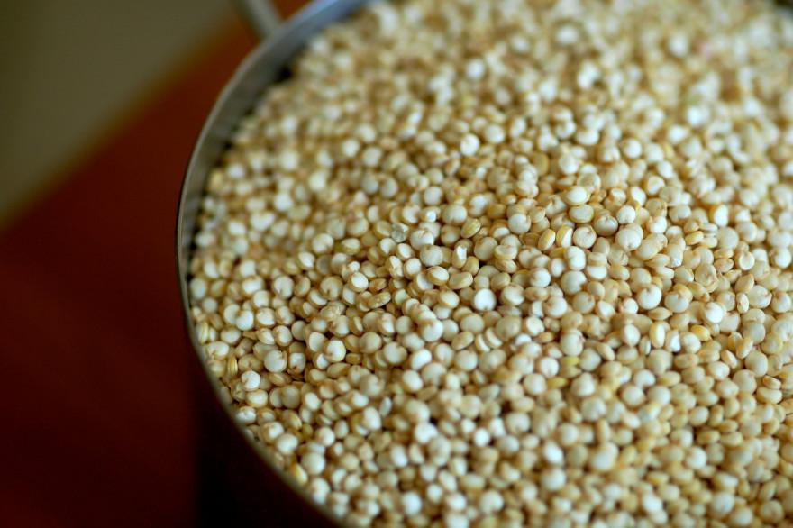 Du quinoa (illustration)