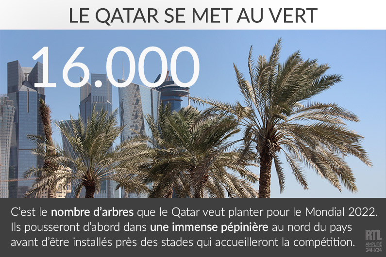 Mondial 2022 : le Qatar se lance dans la plantation d'arbres pour la compétition