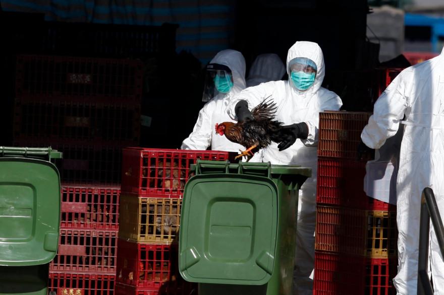 """Il n'y a pas de risque connu """"à ce jour"""" pour les humains en France concernant la grippe aviaire H5N8 (Image d'illustration)"""