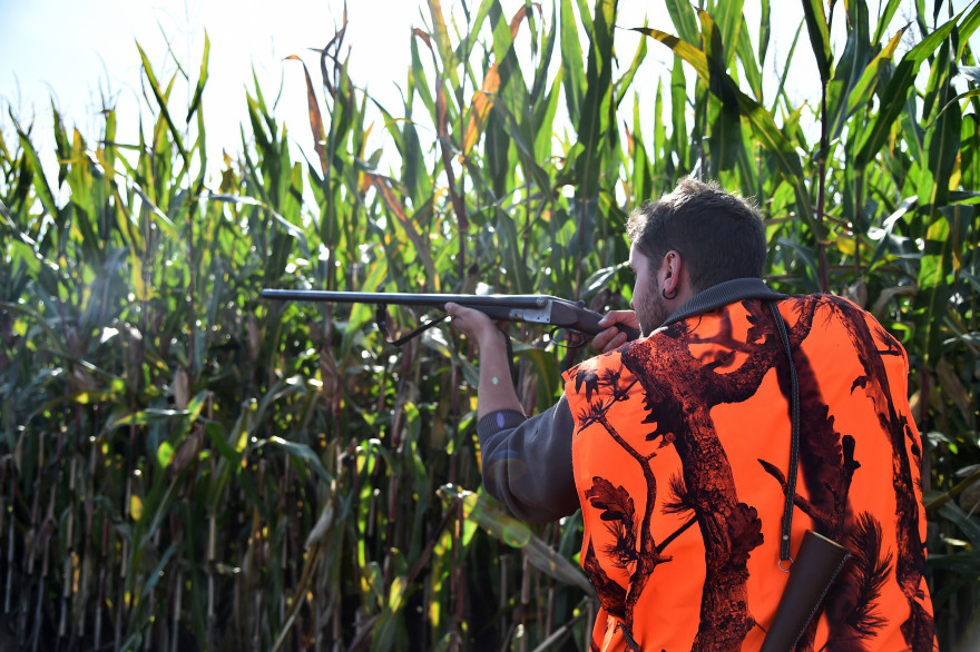 Un chasseur le jour de l'ouverture de la chasse en septembre 2017 (image d'illustration)
