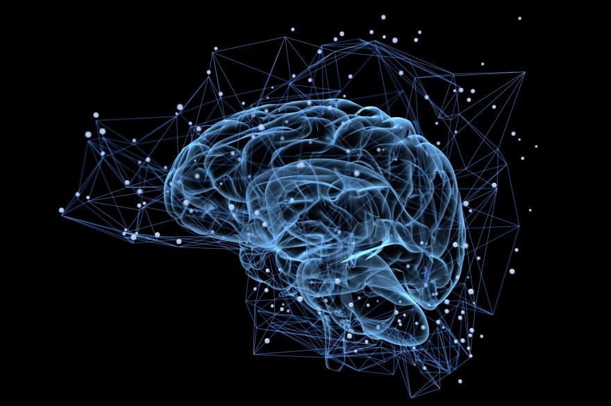 Une vue du cerveau (Illustration)