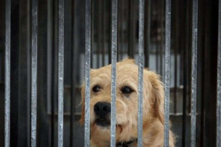 La SPA reçoit beaucoup d'animaux abandonnés en été.