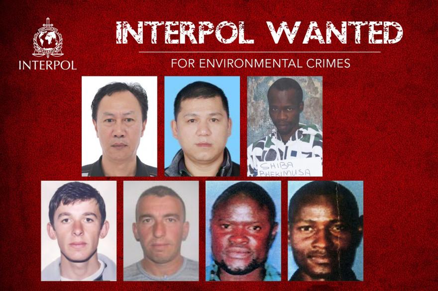 Interpol lance un appel public à témoins pour traquer ces 7 fugitifs, recherchés pour crime contre l'environnement.