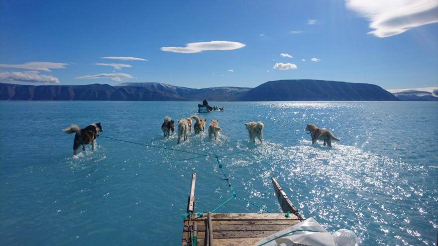 Des chiens de traîneaux courant sur la glace fondue de la banquise du Groenland, le 13 juin 2019