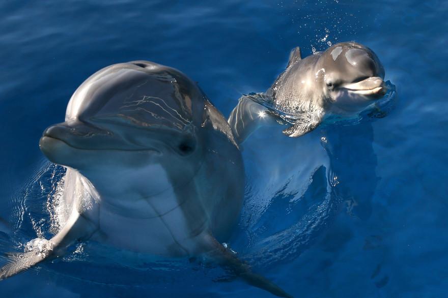 Des dauphins (illustration)