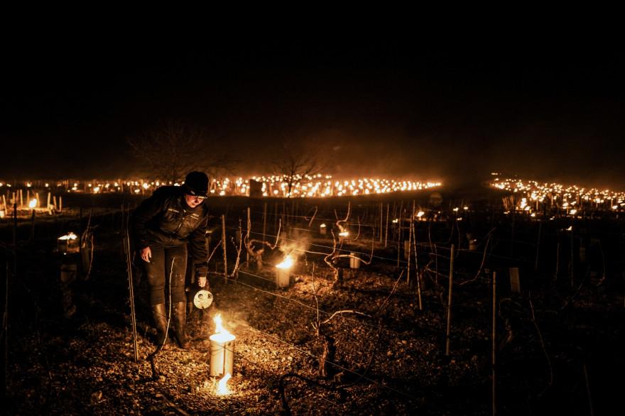 Un viticulteur allume un brasero pour protéger les vignes du gel à Chablis (Yonne) le 7 avril 2021
