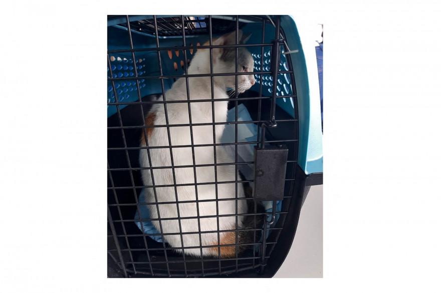 Le chat a été capturé aux abords de la prison Nueva Esperanza au Panama.