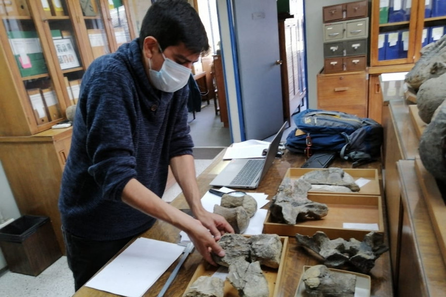 Des os de dinosaure découverts au Chili le 19 avril 2021