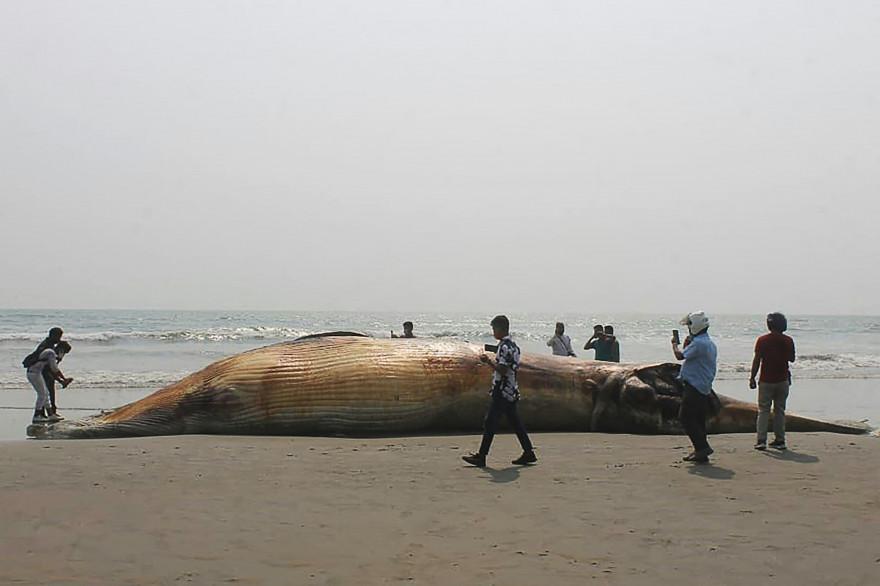 Une baleine échouée sur une plage (illustration)