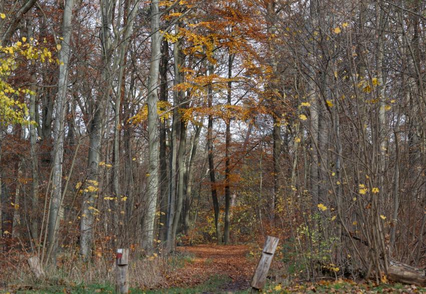 Une forêt en Allemagne (illustration)